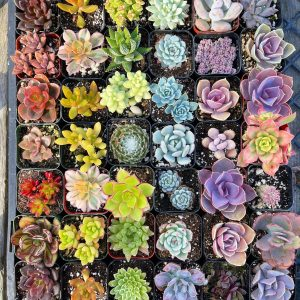 Assorted Succulents for Wedding Favors.